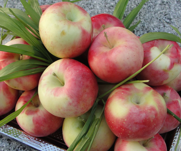 رژیم سیب گلاب